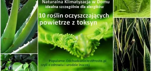Popularne.OdchudzanieJestProste.pl-popularne-rośliny-domowe-oczyszczające powietrze-dla-alergików